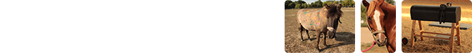 Reitsportgemeinschaft Pritzwalk e. V.